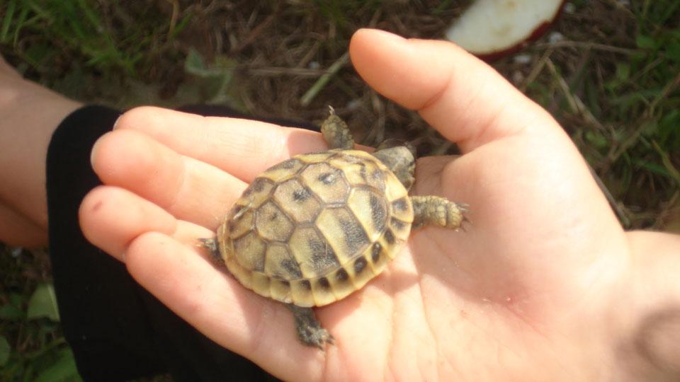 Unsere kleinst Schildkröte