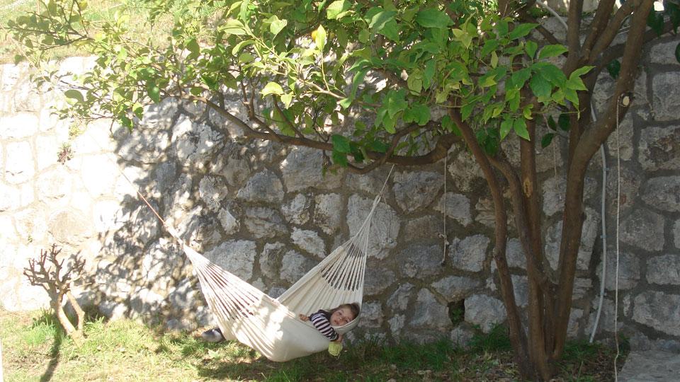 Unter dem Zitronenbaum